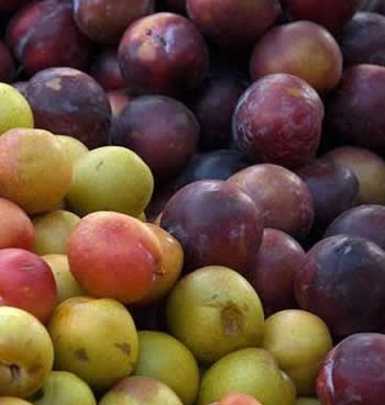 Burning Properties: Plum
