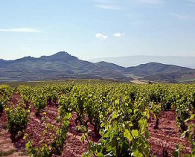 Grapevine Firewood: Spanish vineyards